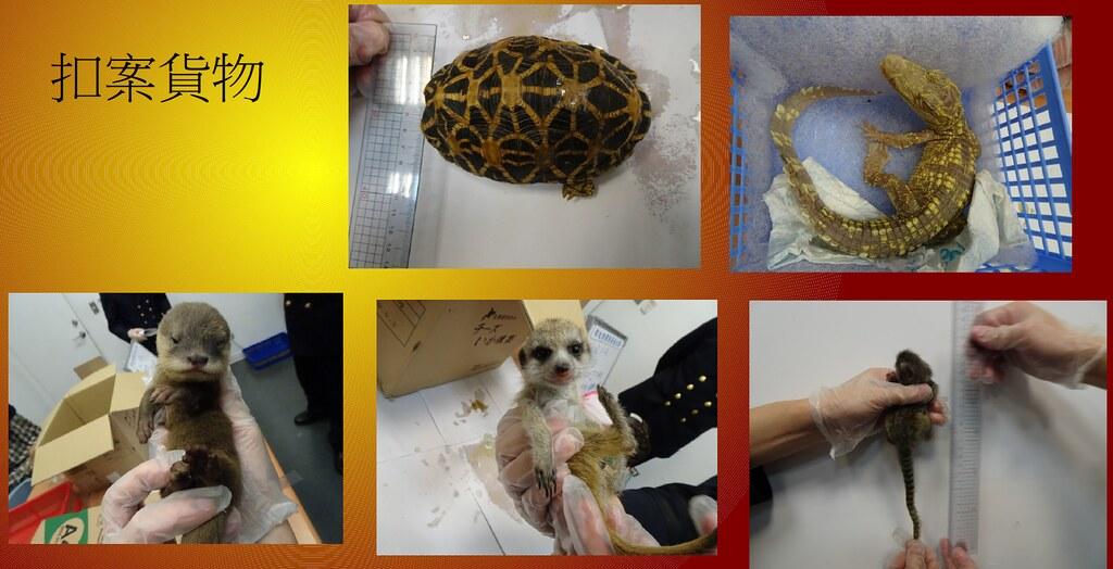 2019年台北關連續查獲多起活體動物走私案件。