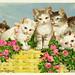 Historische Postkarten mit Haustieren