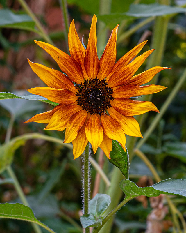 DSC_6781_CFH_garden_103.jpg