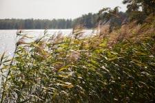 Территория Санатория Берестье летом - заросли камыша на озере