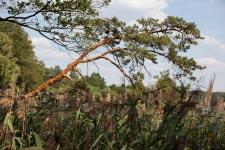 Территория Санатория Берестье летом - фотогеничное дерево на берегу