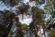 Территория Санатория Берестье летом - лес на территории