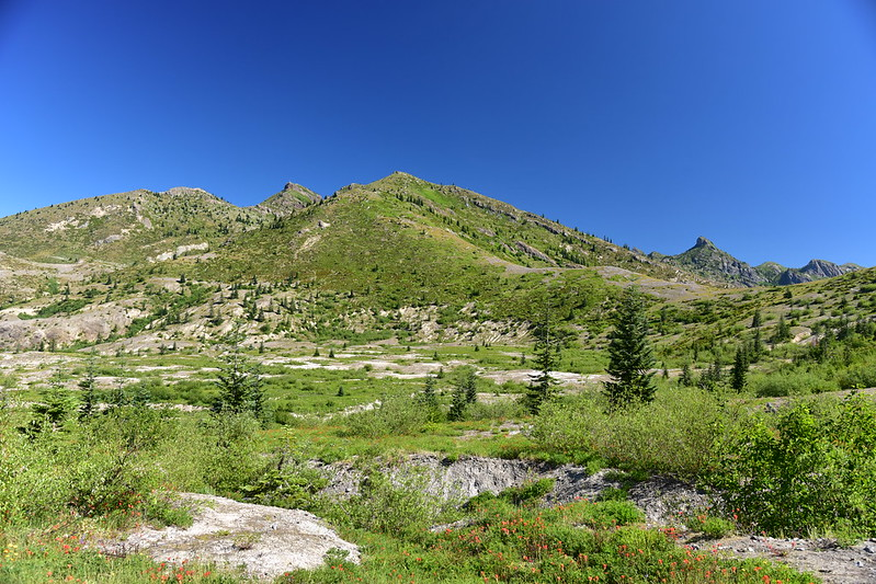 Harry's Ridge Hike