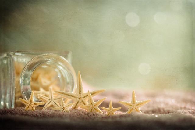 Sea stars collection
