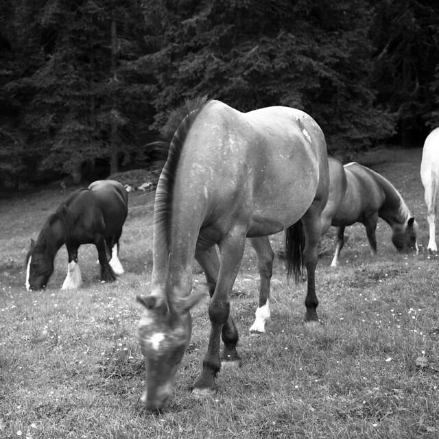Wild horses (Covid free) - Somewhere in Dolomites -  July 2021