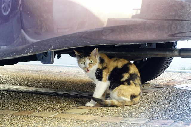 Today's Cat@2021−07−21