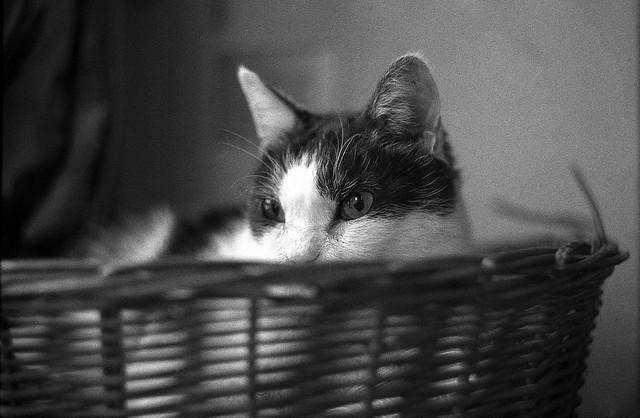 Puffo nella cesta 2