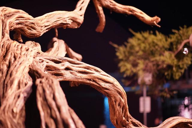 Tea Tree 2