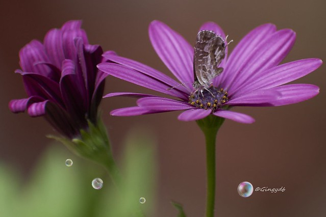Piccole farfalle crescono...