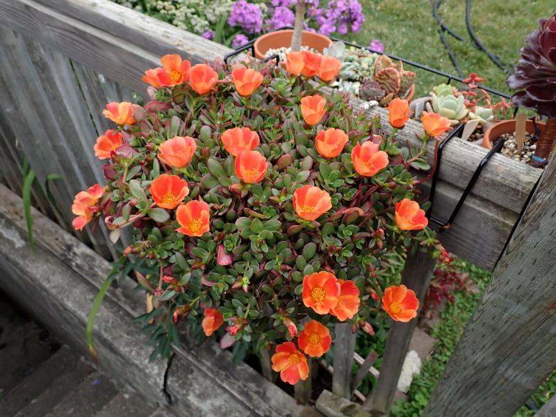 Pots et jardinières 2021 - Page 2 51326352993_83802b00cb_o
