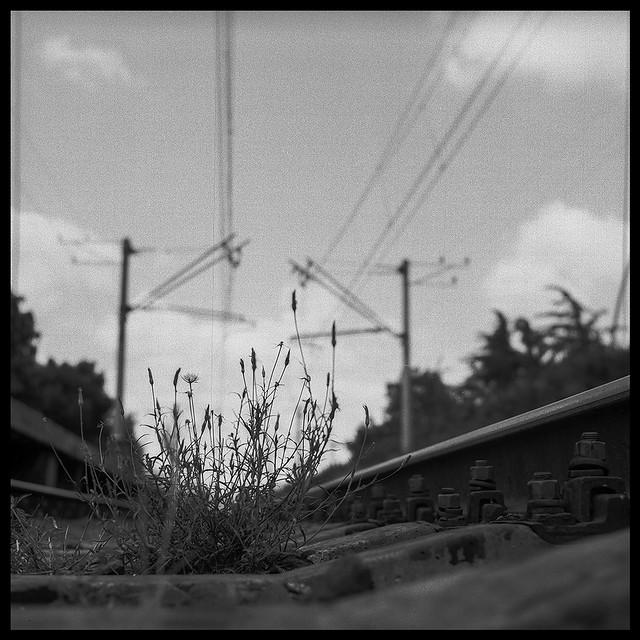 grass on railway