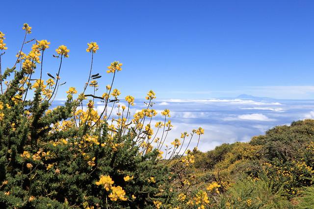 La Palma 2019. Der ganz weite Blick rüber ...