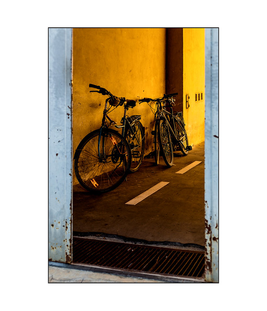 bicycles in evening light