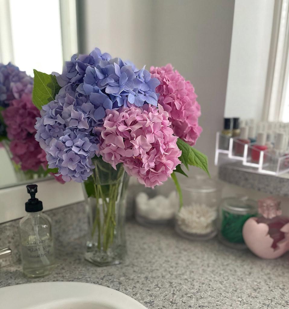 pink purple and blue hydrangeas