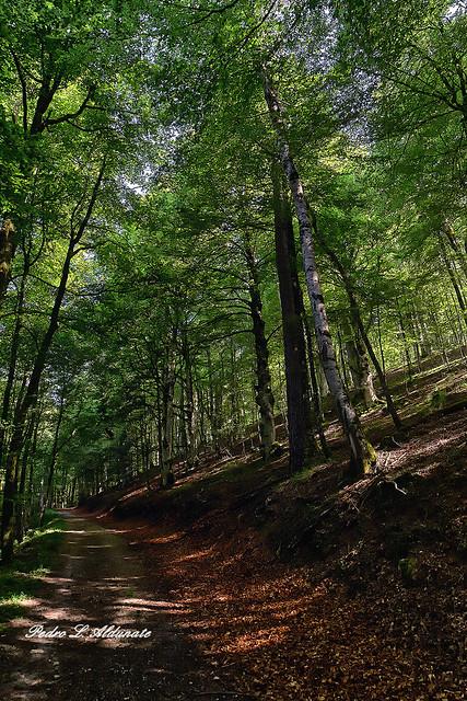 Camino forestal en Quinto Real