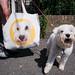 Doggo Double