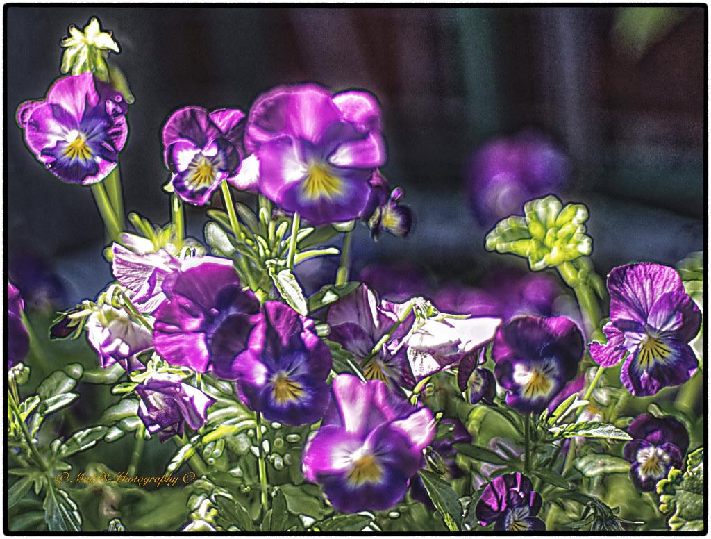 B.Garden.Summer_26
