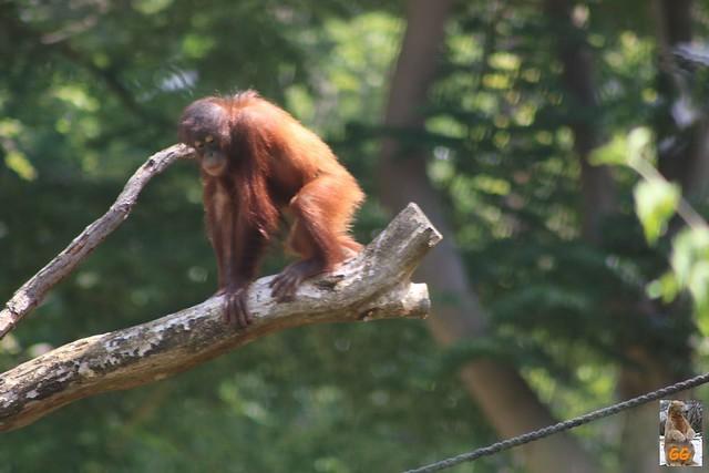 Besuch Zoo Rostock 20.06.21107