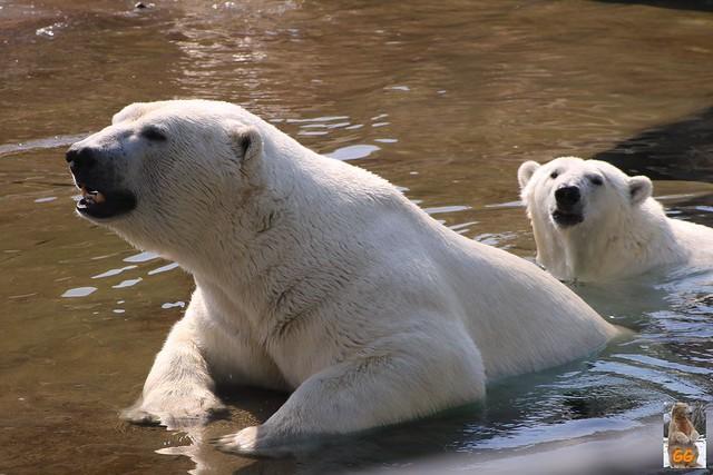 Besuch Zoo Rostock 20.06.21060