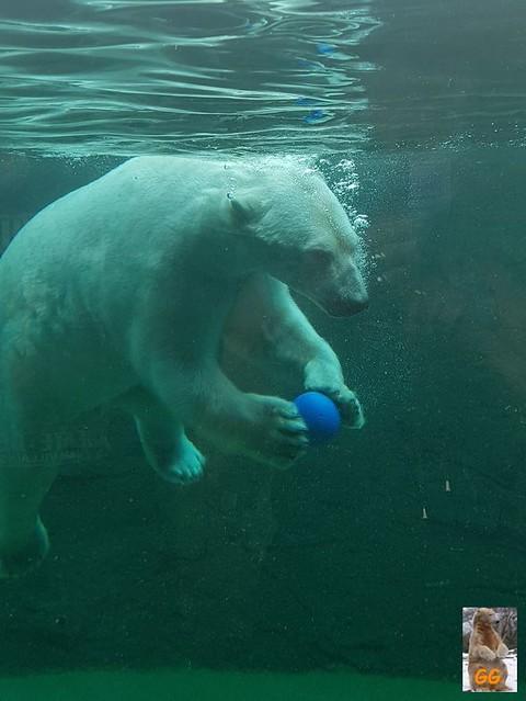 Besuch Zoo Rostock 20.06.21006