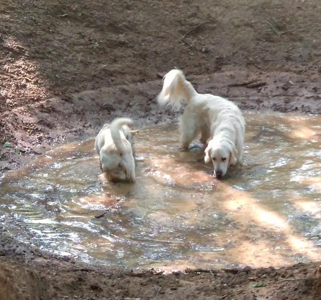 Spaß im Wasserloch