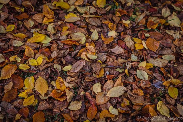 Restos de otoño