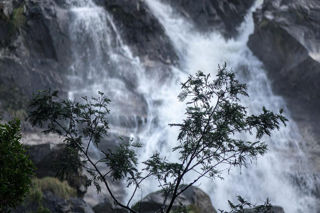 Foreground at falls, St Columba Falls, Pyengana, Tasmania