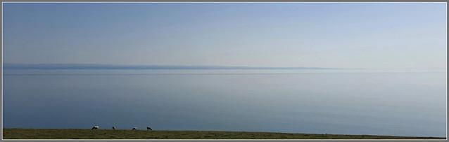 Dim ond Defaid... a Distawrwydd perffaith ar draws Môr Hafren / Just Sheep... and Perfect Silence over the Severn Sea