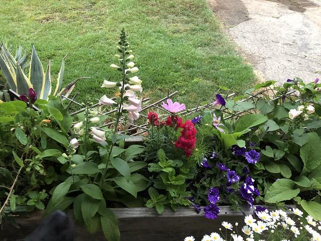 happy planter box