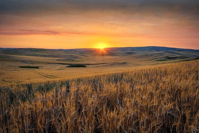The sun sets over the rolling wheat fields in the Palouse area of Eastern Washington State
