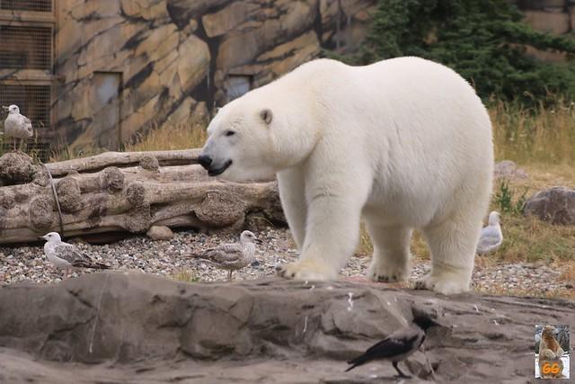 Besuch Zoo Rostock 20.06.21064