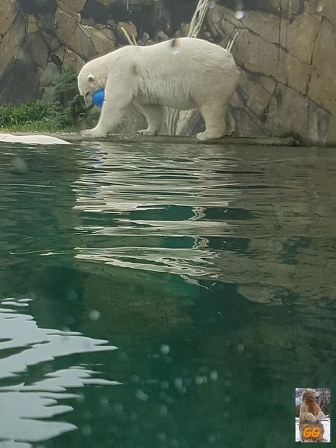 Besuch Zoo Rostock 20.06.21027