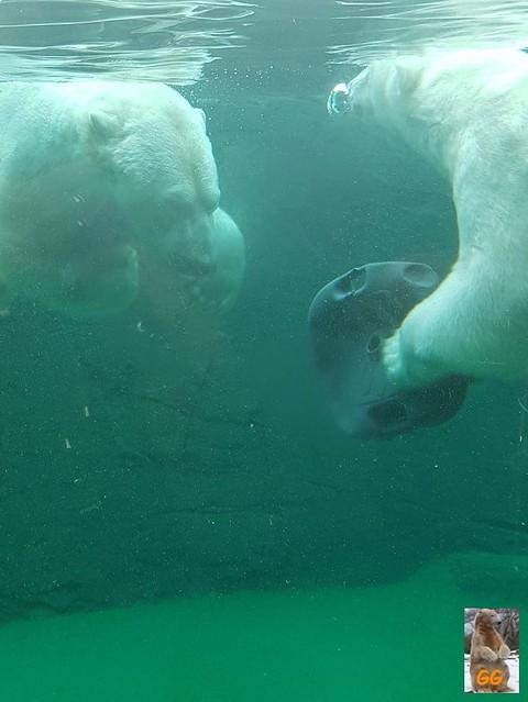 Besuch Zoo Rostock 20.06.21008