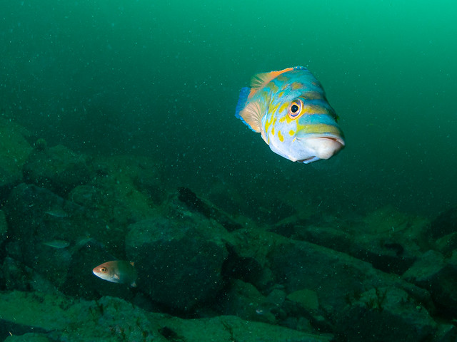 Plongée à Ouessant