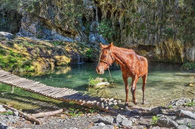 Horse at waterfall. Parque El Cubano, Cuba (In Explore)