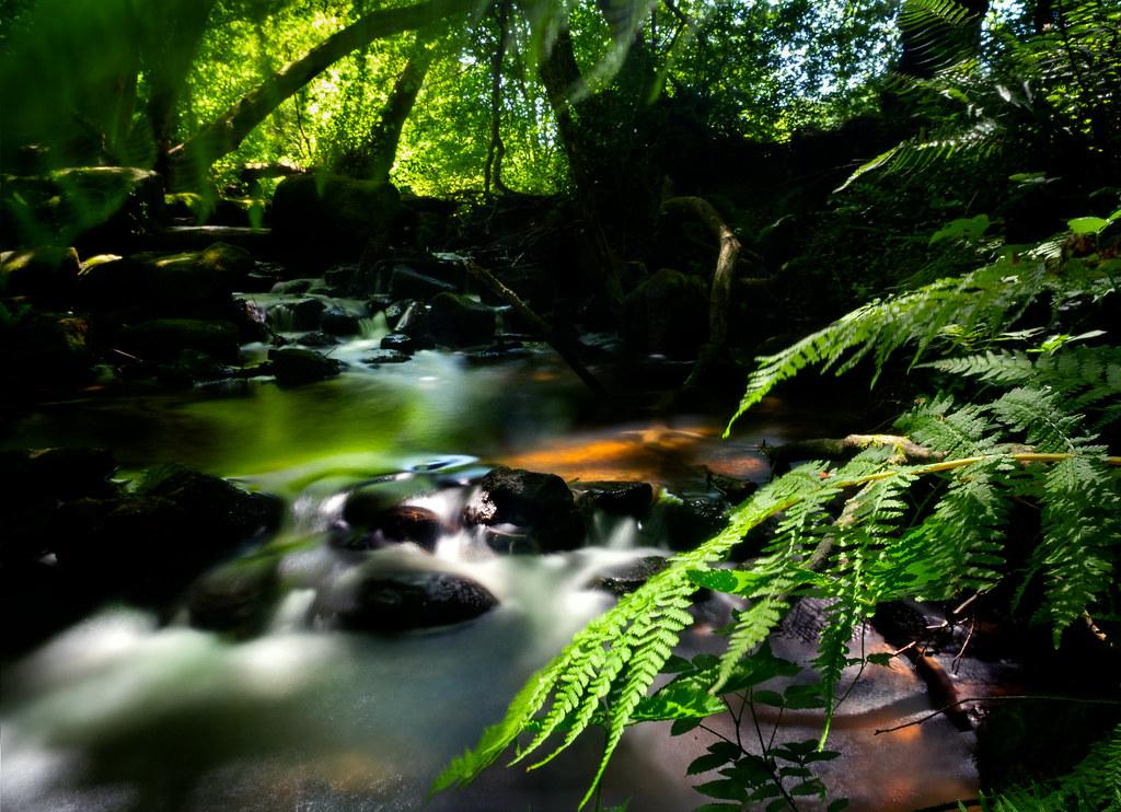La normandie, cette jungle