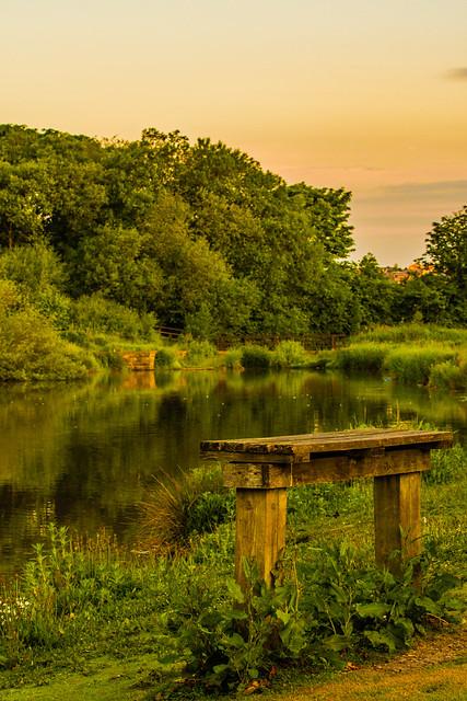 Breezy morning Duck pond 1