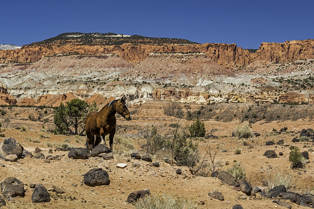 the guardian of the herd - on Utah State Route 24
