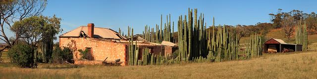 Cowell Cactus House Panorama
