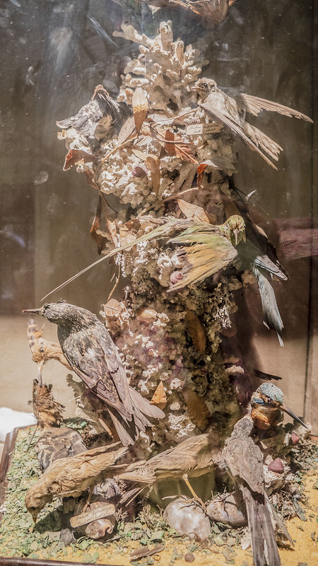A collections of birds taxidermy at Mohamed Ali taxidermy museum