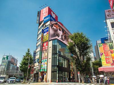 Nihon_arekore_02436_Shinjuku_cat_100_cl