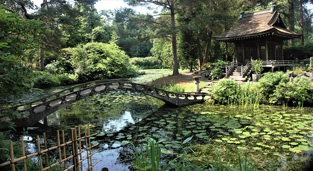 The Lily Ponds