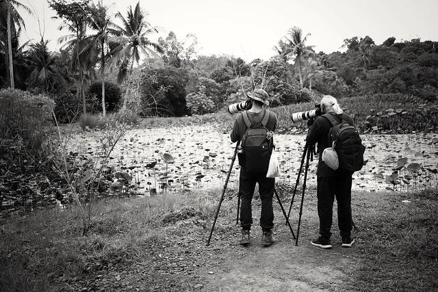 Birding @ Ubin Island