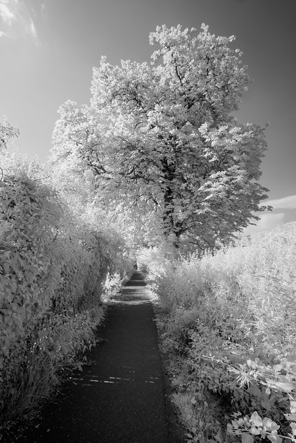 Path by the tree