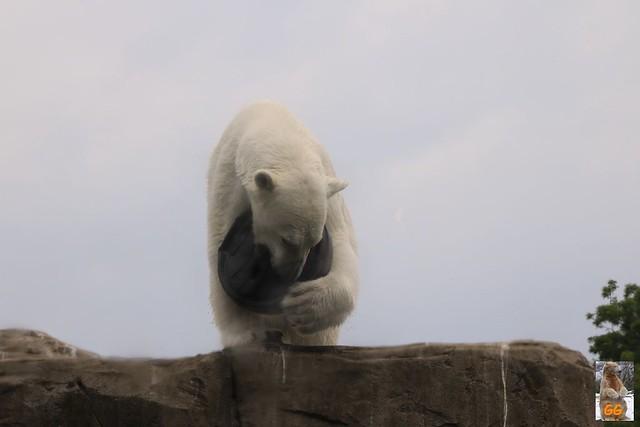 Besuch Zoo Rostock 20.06.21079