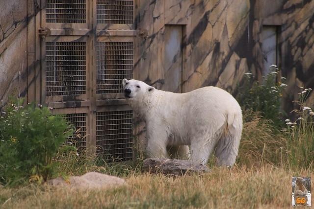 Besuch Zoo Rostock 21.06.21019