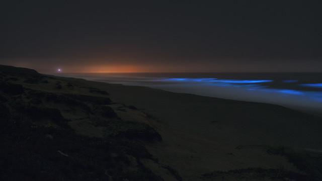 The Ocean Glows at Night - 3