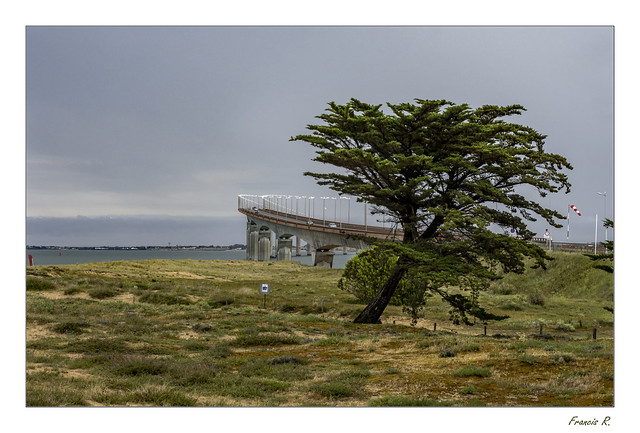 L'arbre qui souhaitait aller sur le continent