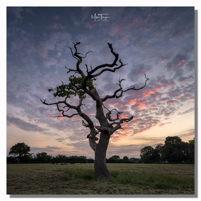 Twilight Tree.(Explored).