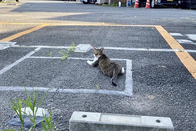 Today's Cat@2021−07−22